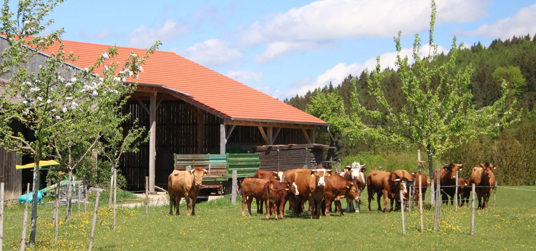 Junge Obstbäume und glückliche Kühe. Foto: Bertram Sturm